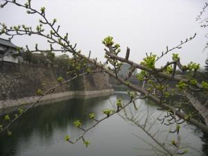 大阪城と銀杏の木