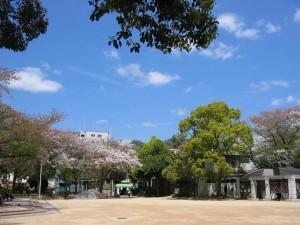 池田駅前公園の桜