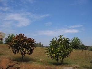 南インド バンガロール 冬
