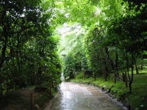 京都の風景(京都府)