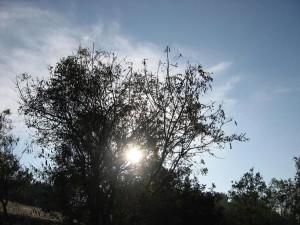 バンガロールの朝日(南インド)
